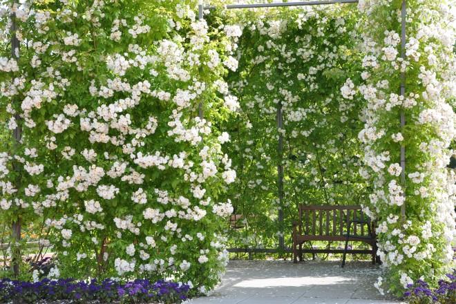 Rosenzimmer in der Nähe des Rosengartens