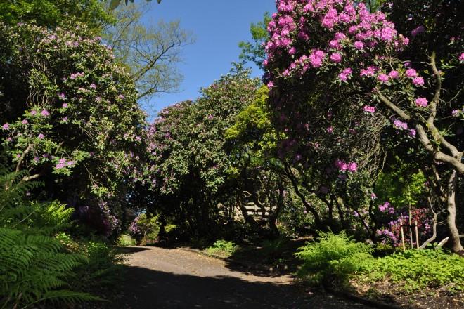 Weg im Rhododendrontal