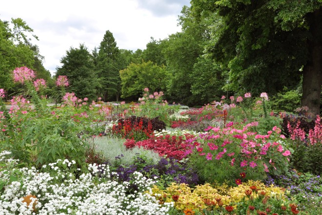 Sommerblumen auf den Farbenterrassen