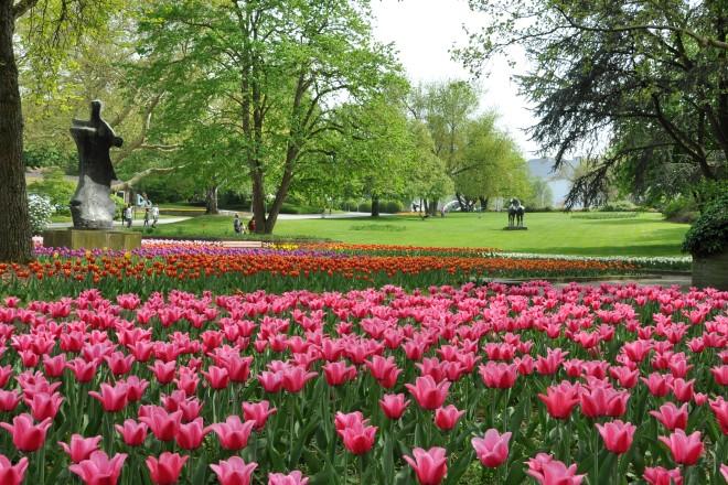 Tulpen blühen auf den Farbenterrassen