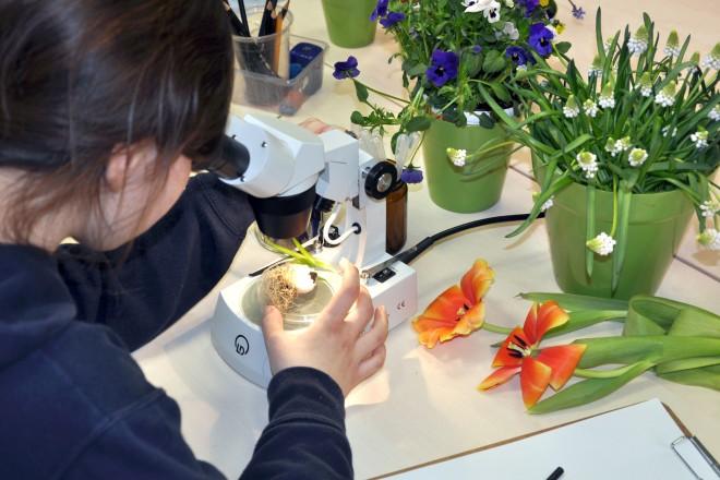 Beim Mikroskopieren in der Schule Natur