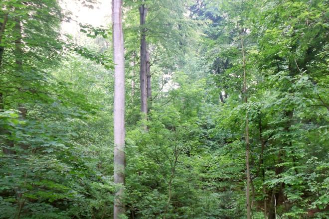 Stufiger Laub-Mischwald