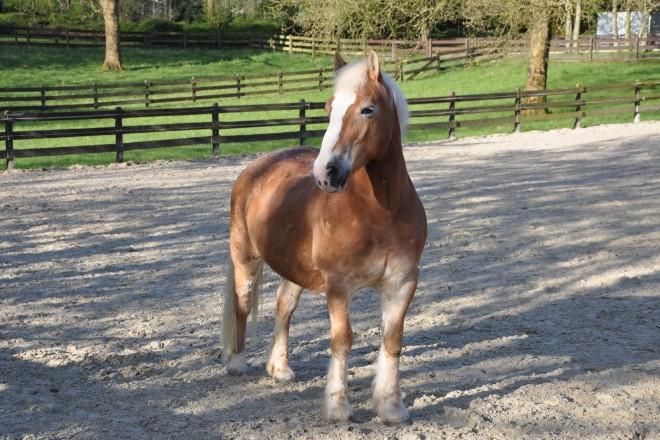 Pferd am Ponyhof