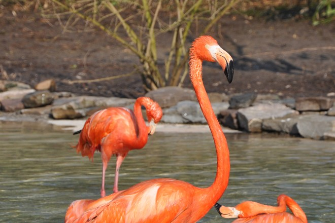 Flamingos in der Vogelfreifluganlage